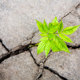Small green sprout in the dry cracked soil