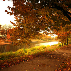 autumn park with yellow leaves, Indian summer