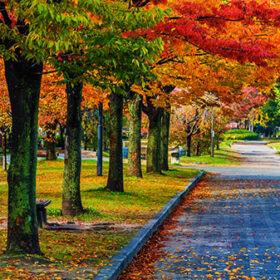 Autumn Laves at Hiroshima Central Park in Japan