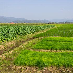 земельна ділянка в полі