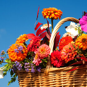 Beautiful, bright fall flowers in a wicker basket against brilliant blue skies