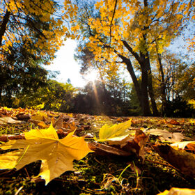 Colorful fall autumn park with falling leaves and sun rays