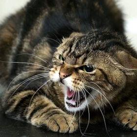 сказ у котів