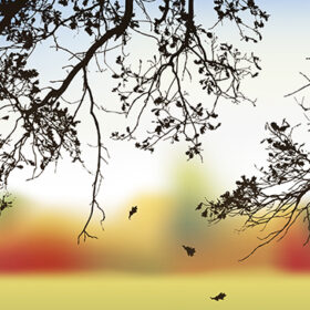 Vector image. View of the autumn forest through the branches of an oak