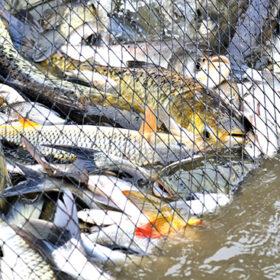 риба в сітці